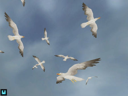 Bird Flock: Seagull