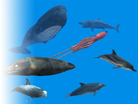 Rigged Sea Animals